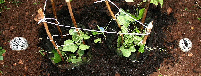Protective castle for mouse melons