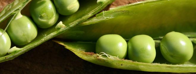 suttons_seeds_onward_peas