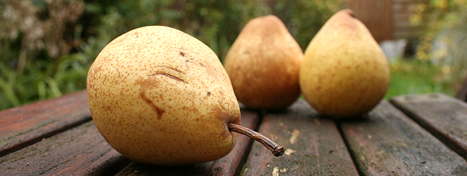 how to make pear wine