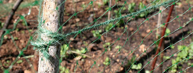 Pea netting support