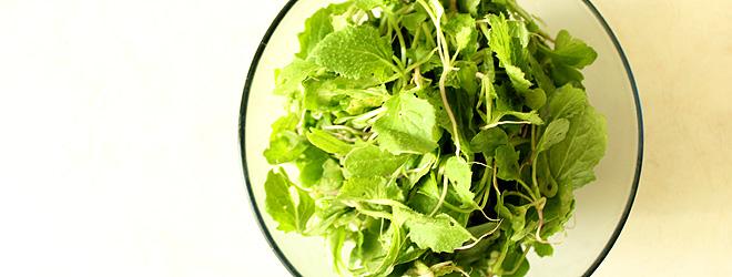 Edible turnip leaves