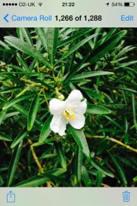 Plantsnapp2