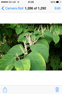 Plantsnapp3