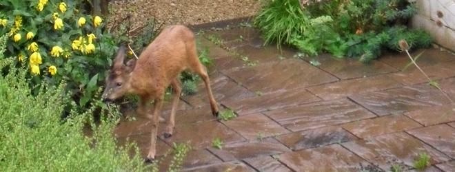 Deer Photo Garden