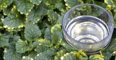 Lemon Balm Wine Recipe