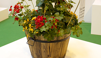 Planting Wine Barrel