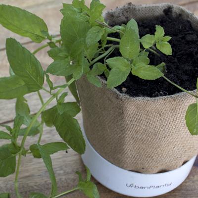 Urban Planty Jute Pot