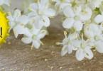 sparkling elderflower champagne recipe