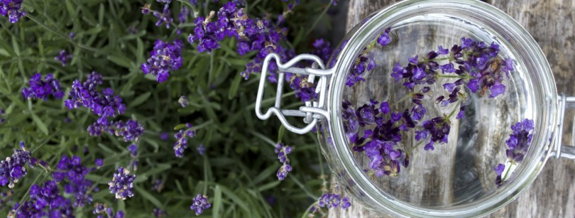 Easy to make lavender gin recipe