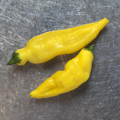 how to grow aji lemon chillis