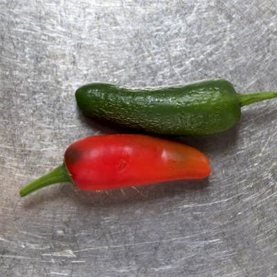 how to grow jalapeno pepper