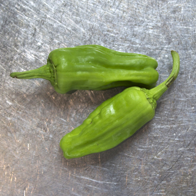 how to grow padron peppers