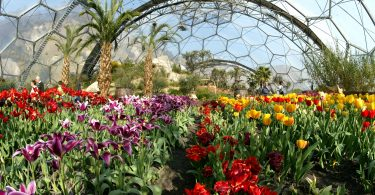 8a-wideshot-tulips-warm-temperate-biome-credit-the-eden-project