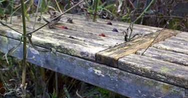 dirty garden bench