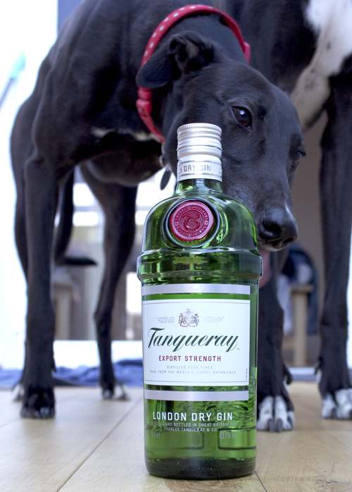 tanqueray gin greyhound salty dog