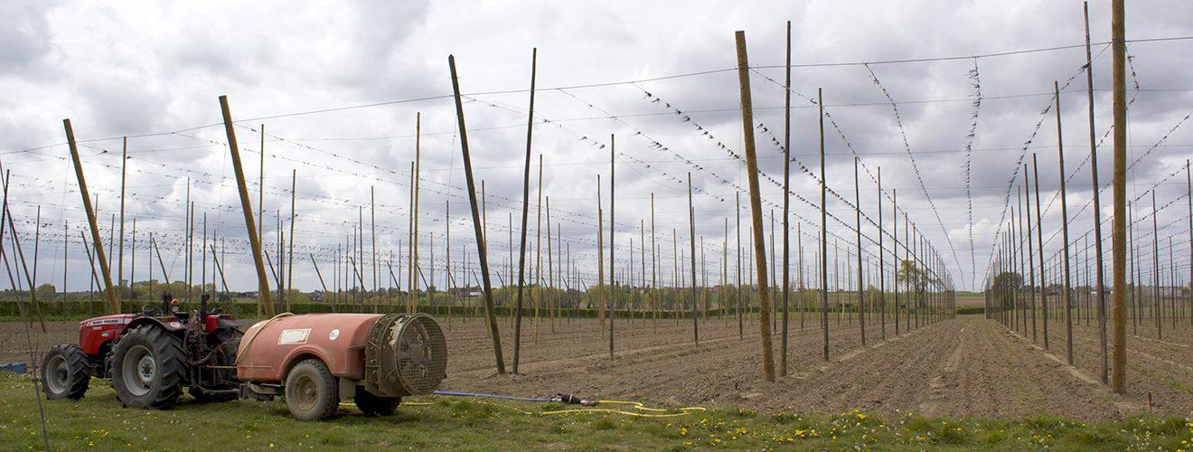 Poperinge Hop Farm Flanders Belgium