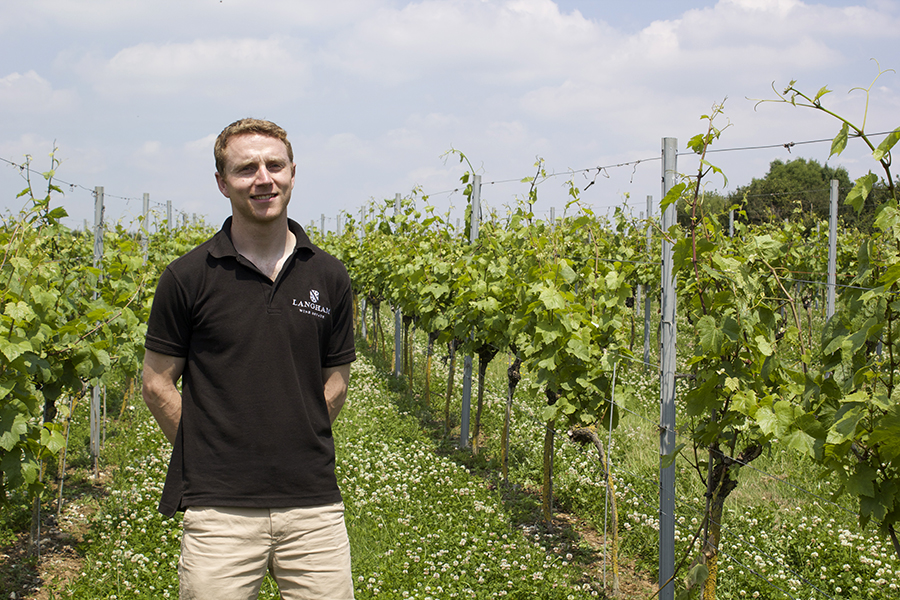 winemaker in dorset