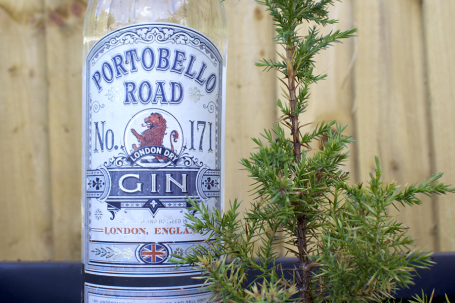 can i grow juniper for gin