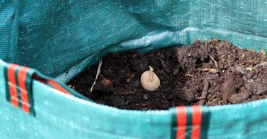 Vine Rituals Sack for Potatoes