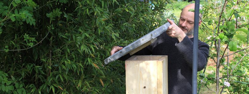 Installing a natural bee hive