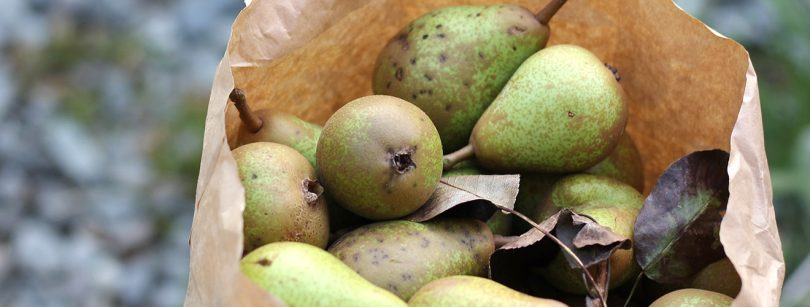 glut of pear inspiration